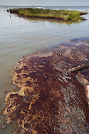 Oil on the surface of Barataria Bay washed into the marshland in Plaquimenes Parish, Louisiana
