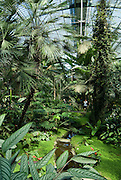 Palmengarten, Palmen und tropische Pflanzen im Palmenhaus, Frankfurt am Main, Hessen, Deutschland | Palmengarten, botanical garden in Frankfurt, Palm house, Germany