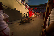 Workers carry a dead bull during a bullfight of the San Fermin festival in Pamplona, Spain, Tuesday, July 7, 2015.