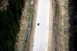 CANADA ALBERTA FORT MCMURRAY 10MAY07 - Aerial view of Black bear on a paved road north of Fort McMurray, Alberta, Canada. The Alberta Tar Sands are the largest deposits of their kind in the world and their production is the single largest contributor to Canada's greenhouse gas emissions...Alberta's tar sands are currently estimated to contain a crude bitumen resource of 315 billion barrels, with remaining established reserves of almost 174 billion barrels, thus making Canada's oil resources ranked second largest in the world in terms of size...The industry has brought wealth and an economic boom to the region but also created an environmental disaster downstream from the Athabasca river, polluting the lakes where water and fish are contaminated. The native Indian tribes of the Mikisew, Cree, Dene and other smaller First Nations are seeing their natural habitat destroyed and are largely powerless to stop or slow down the rapid expansion of the oil sands development, Canada's number one economic driver...jre/Photo by Jiri Rezac / WWF-UK..© Jiri Rezac 2007..Contact: +44 (0) 7050 110 417.Mobile: +44 (0) 7801 337 683.Office: +44 (0) 20 8968 9635..Email: jiri@jirirezac.com.Web: www.jirirezac.com..© All images Jiri Rezac 2007 - All rights reserved.