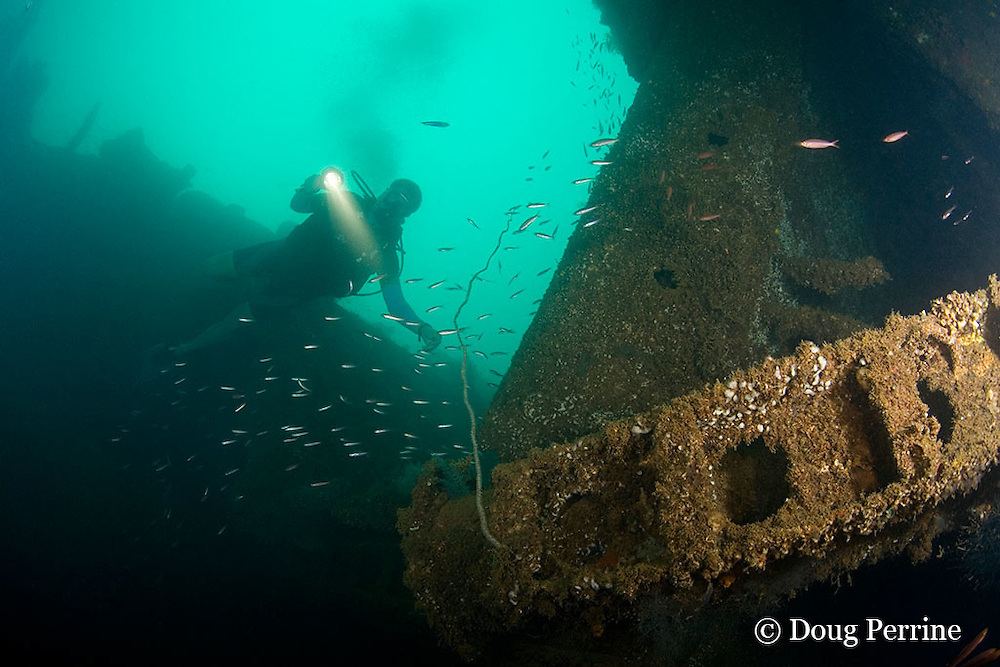 diver explores a cargo hold of the wreck of the Seian Maru, a Japanese cargo vessel sunk by Allied air strike on Nov. 19, 1944; the wreck lies on its port side at a depth of 25 m near Alava Pier in Olongapo Harbor, Subic Bay, Philippines, MR 378