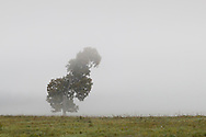 Shawangunk, New York - A tree seems to lean into the morning fog in Ulster County on Sept. 28, 2014.