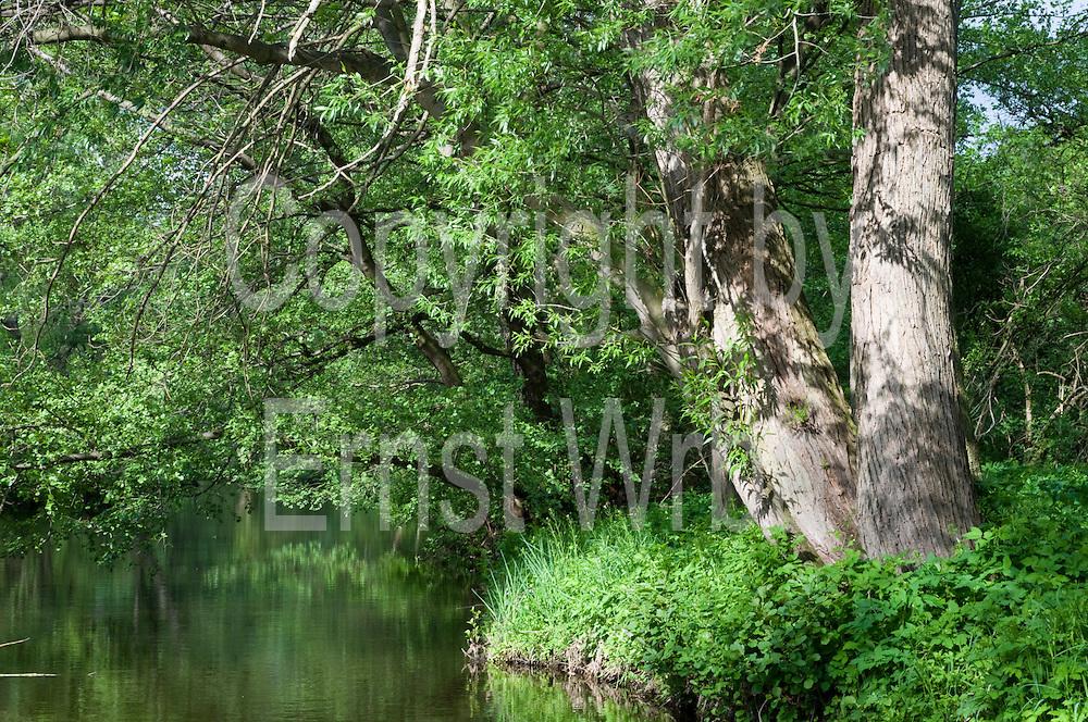 Bode bei Thale, Harz, Sachsen-Anhalt, Deutschland | River Bode near Thale, Harz, Saxony-Anhalt, Germany