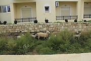 Gavros near Giorgioupolis Province Rethymnon, Kreta. ile de Crète. © Romano P. Riedo   fototpunkt.ch