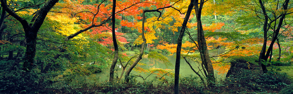 Autumn maples enhance the quiet beauty of the famous Moss Garden, or Saihoji, in Kyoto, Japan.