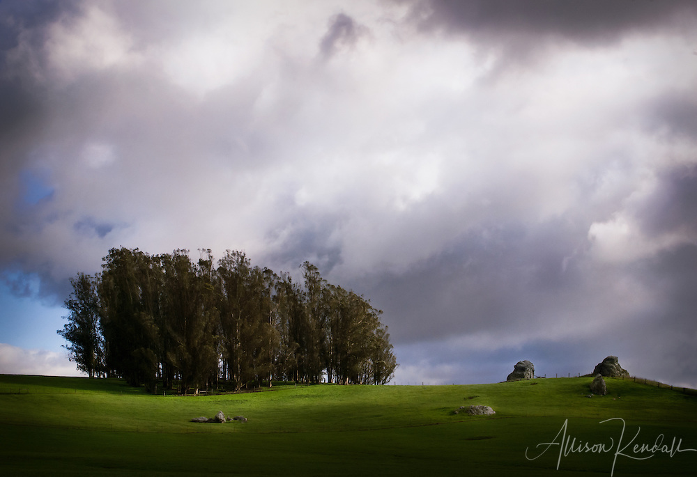 Windswept winter clouds billow across vibrant green grassy hills and a stand of trees in rural Sonoma County fine art photography, art photography, fine art, prints, photo print, fine art prints, photography art prints,