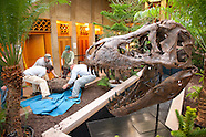 20090412 Jurassic Install