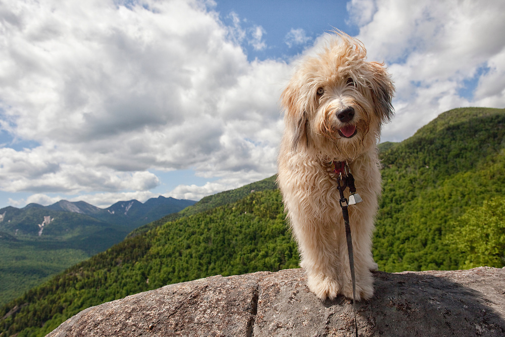 Fluffy smiling dog on summit of the First Brother