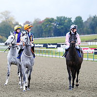 Lingfield 1st November