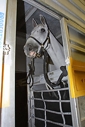 Departure of the Horses from<br />