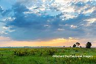 63893-03718 Sunrise and prairie Prairie Ridge State Natural Area Marion Co. IL