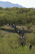 A group of 42 illegal immigrants, who crossed from Mexico on to the Tohono O'odham Nation moves through the desert about 18 miles north of the border southeast of Sells, Arizona, USA.  The group walks in temperatures exceeding 100 degrees on a trail along the Baboquivari corridor, the deadliest crossing point along the border.  Brown water in some water jugs indicates that some of the group ran out of water and have filled their jugs from depleted cattle ponds.