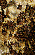 Goa Lawah bat cave temple. Zillions of bats sleeping upside down during daytime at the cave ceiling.