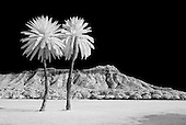 Hawaii Infrared