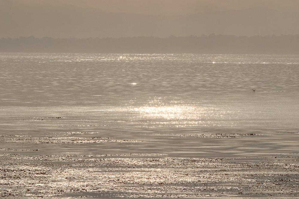 Sunrise over kelp beds, Monterey Bay, Monterey California