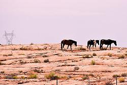 Profile of Wild Horses, Near Red Mesa, Arizona, USA