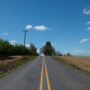Agriculture fields.<br /> Woodburn, Oregon.