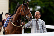 Inyamazane ridden by Charles Bishop and trained by Mick Channon in the Mj Church Contracting Ebf Stallions Fillies' Novice Stakes (Plus 10 Race) race.  - Ryan Hiscott/JMP - 24/05/2019 - PR - Bath Racecourse - Bath, England - Friday 24th May 2019 Race Meeting at Bath Racecourse