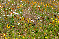 Butterfly habitat (montane) at Double Bunk Meadow, Sequoia NF, Tulare Co, CA, USA, on 24-Jul-16