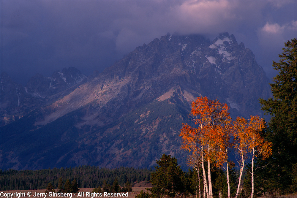 Mount Moran in the Grand Teton range and aspen trees in autumn in Grand Teton National Park, WY.