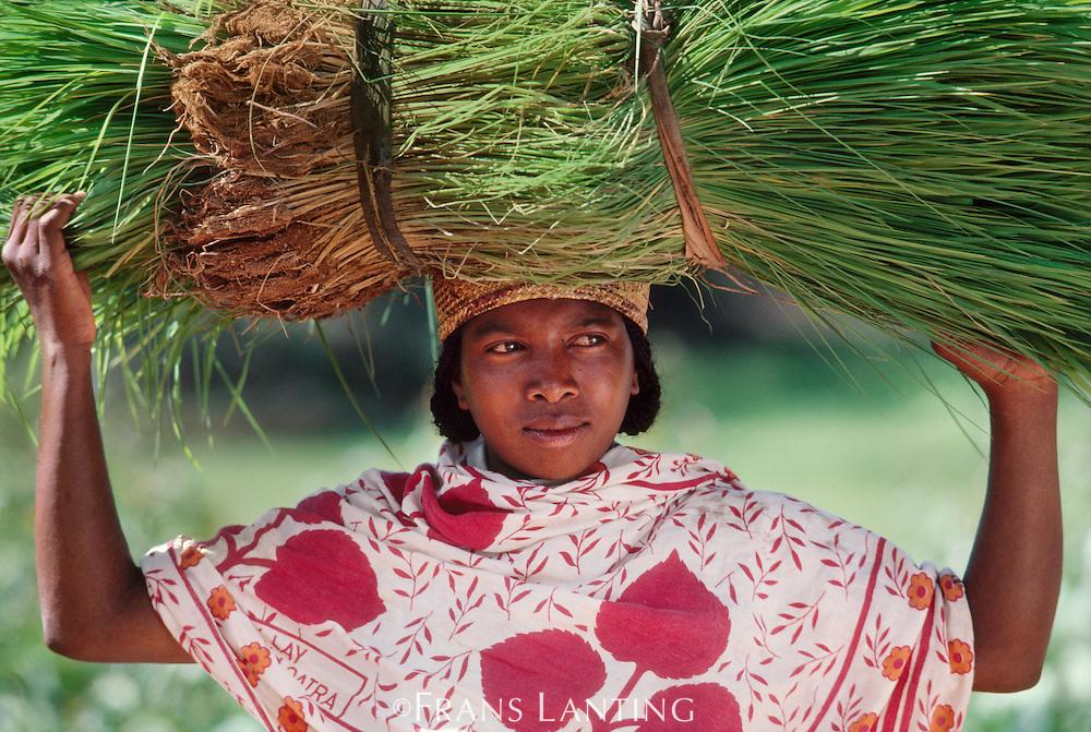 Betsileo woman carrying rice plants, Madagascar