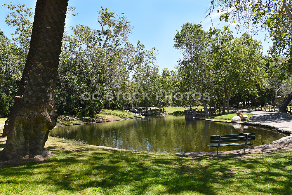 Lower Pond With a Sitting Bench at Irvine Regional Park