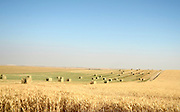 Harvested wheat field with bales of straw. Photographed in Israel in May