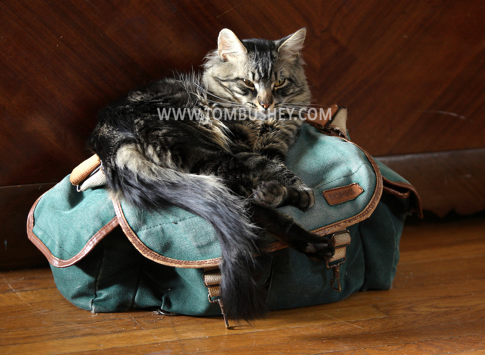 Middletown, New York - A long-haired cat sits on a photographer's bag on April 9, 2010.