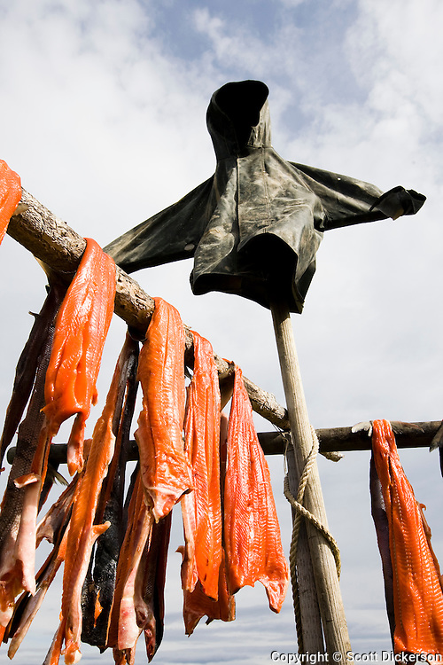 Sockeye salmon from the Newhalen River are hung out to air dry before being smoked as part of native Alaskan subsistence tradition. The rain jacket scarecrow is to keep seagulls and other birds away from the tempting flesh.