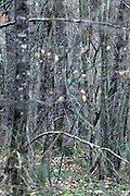 tree trunks and twigs in dense forest during late autumn early winter