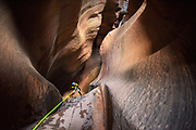 Imlay Canyon, Zion National Park, Utah