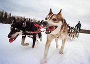 DETROIT, MICHIGAN - USA -  Dogsledding across a foren lake in Minnesota's Boundary Waters. (Photo by Bryan Mitchell)