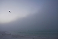 Foggy Morning on the Beach