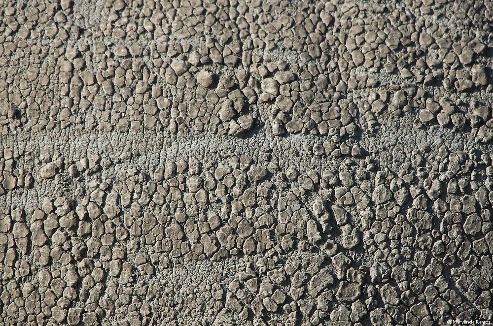 Rhino skin is like sandpaper.