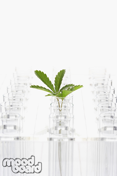 Plant in glass surrounded by empty glasses