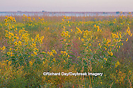 63863-02512 Wildflowers at Prairie Ridge State Natural Area, Marion Co., IL