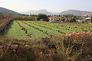 Valley farmland with red terra rosa soil, Lliber, Marina Alta, Alicante province, Spain