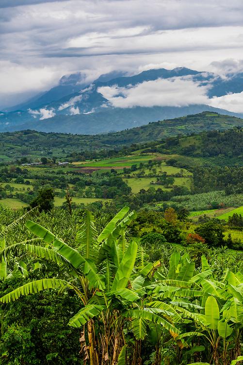 Lush farm land, Kabarole District, Uganda.