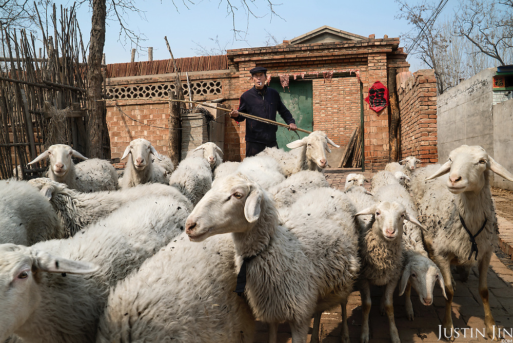 A farmer shepherds his sheep in Hebei, on the outskirts of Beijing, where rural land is increasingly destroyed to make way for urbanisation. <br /> <br /> <br /> China is pushing ahead with a dramatic, history-making plan to move 100 million rural residents into towns and cities over six years &mdash; but without a clear idea of how to pay for the gargantuan undertaking or whether the farmers involved want to move.<br />