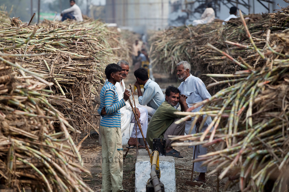 Farmers wait in line outside a sugar factory, selling their sugarcane produce in Modi Nagar, in Uttarpradesh, India, on Friday, November 12, 2010. Photographer: Prashanth Vishwanathan/Bloomberg News