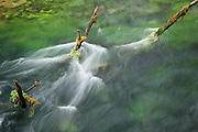 Photo by Leandra Lewis of water rushing around tree branches at Alley Springs, Ozark National Scenic Riverways in Missouri.