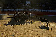 Bullfight using a forcão, the wooden frame handled by a group of men