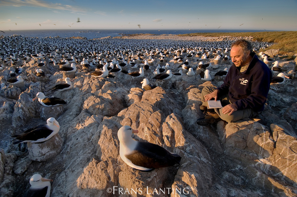 Writer Carl Safina observing black-browed albatrosses, Thalassarche melanophrys, Steeple Jason Island,  Falkland Islands