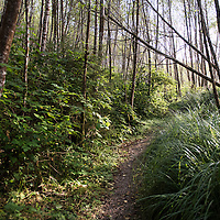 A hiking path near Fern Canyon, a canyon in the Prairie Creek Redwoods State Park in Humboldt County, California, USA