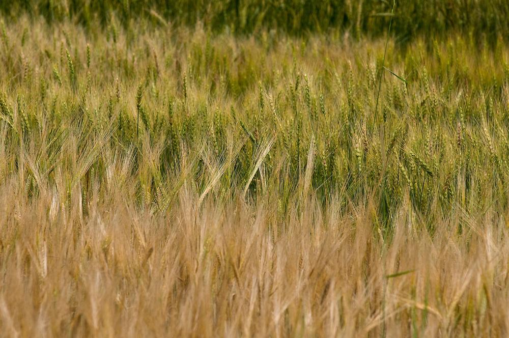 Small grain test plots