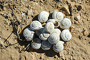 Israel, Negev plains, A pile of snail shells