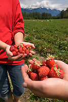 Pemberton is farm country and fresh strawberries are one of the delicious crops.