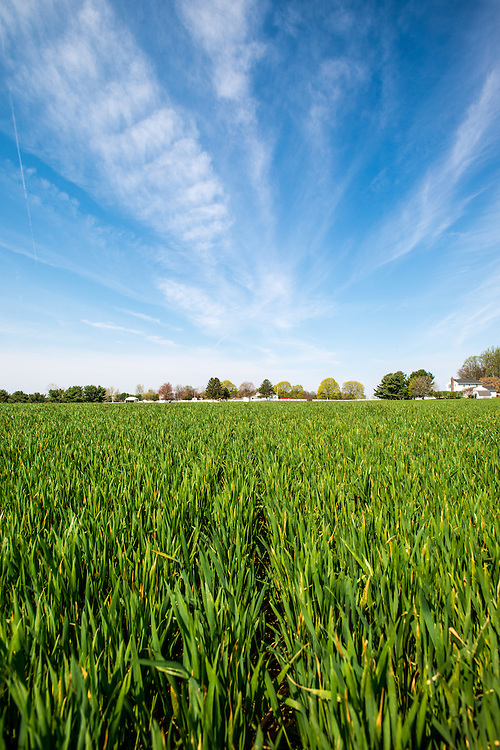 Field of cover crops under blue skies on a farm