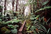Kamakou Preserve, Molokai, Hawaii