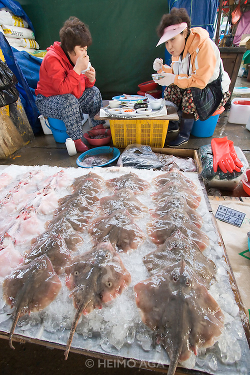 Jagalchi Fish Market. Rays.